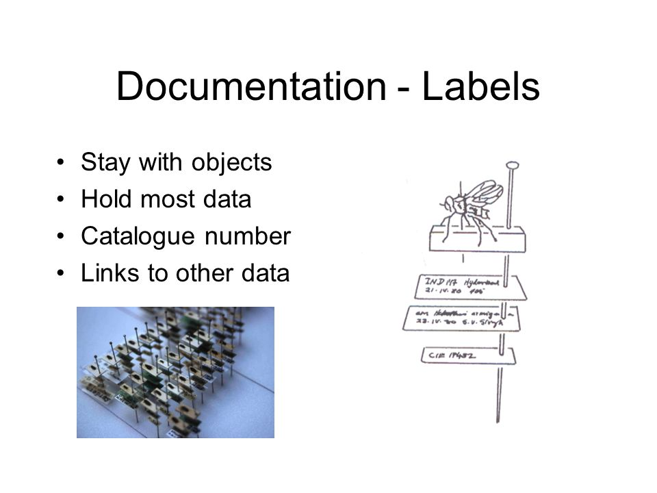 Documentation - Labels Stay with objects Hold most data Catalogue number Links to other data