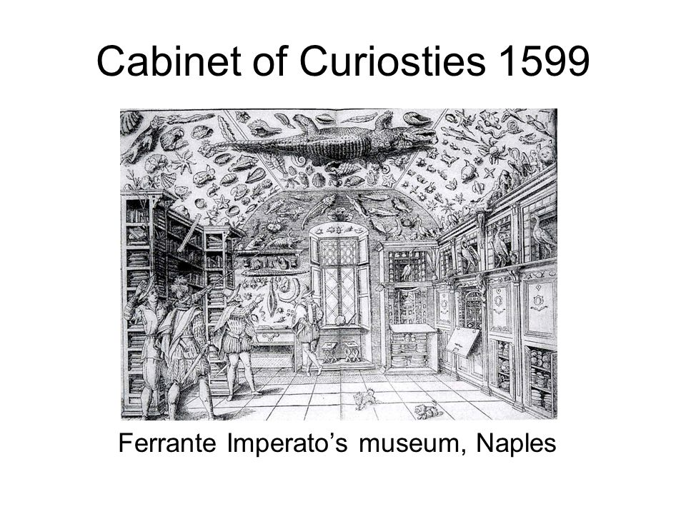 Cabinet of Curiosities 1655 Olaus Worm's museum, Leiden