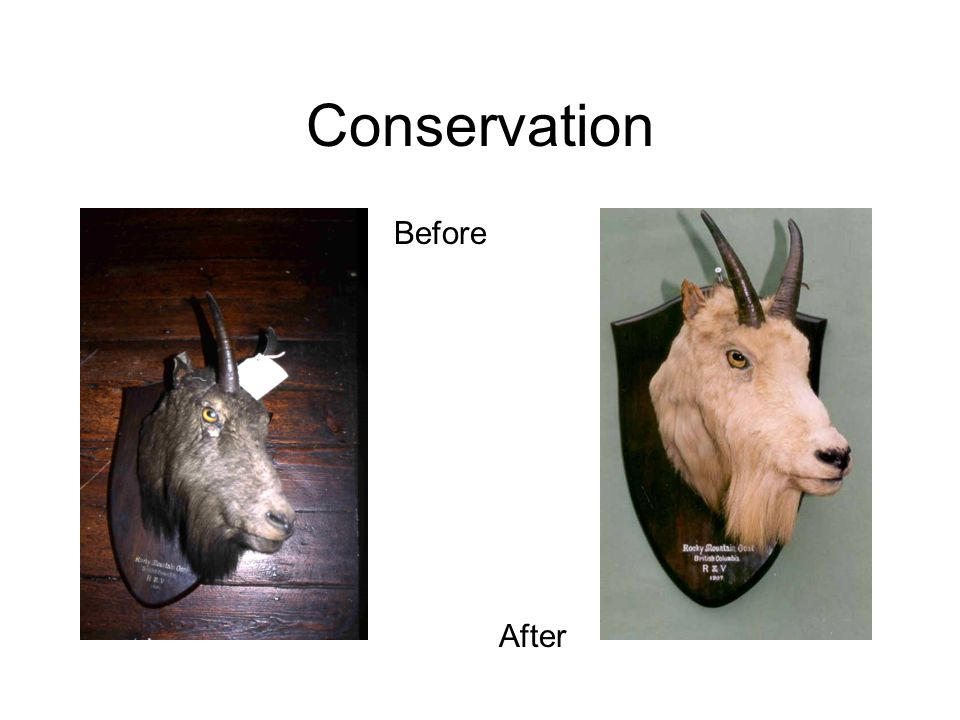 Conservation Before After