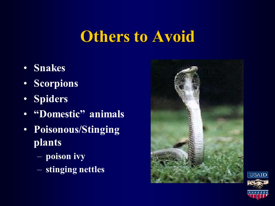 Others to Avoid Snakes Scorpions Spiders Domestic animals Poisonous/Stinging plants –poison ivy –stinging nettles