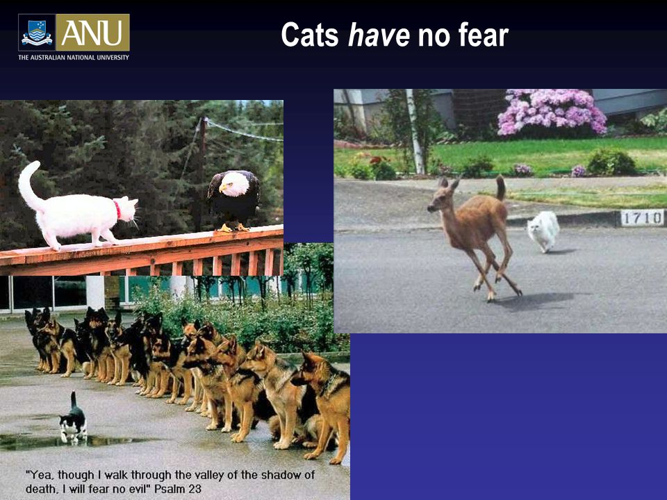 Cats have no fear