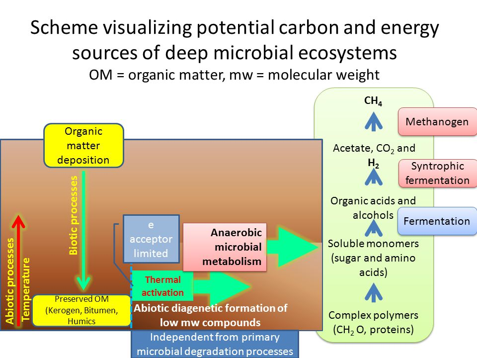 Scheme visualizing potential carbon and energy sources of deep microbial ecosystems OM = organic matter, mw = molecular weight CH 4 Acetate, CO 2 and