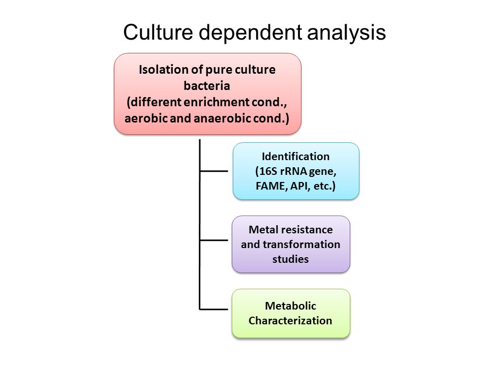 Isolation of pure culture bacteria (different enrichment cond., aerobic and anaerobic cond.) Isolation of pure culture bacteria (different enrichment