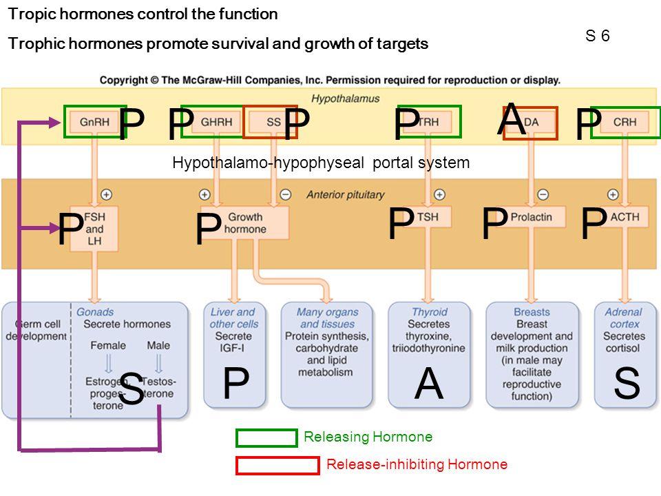 Tropic hormones control the function Trophic hormones promote survival and growth of targets Releasing HormoneRelease-inhibiting Hormone Hypothalamo-h