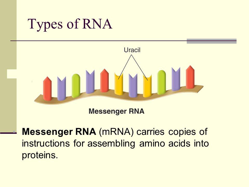 Types of RNA Ribosomes are made up of proteins and ribosomal RNA (rRNA).