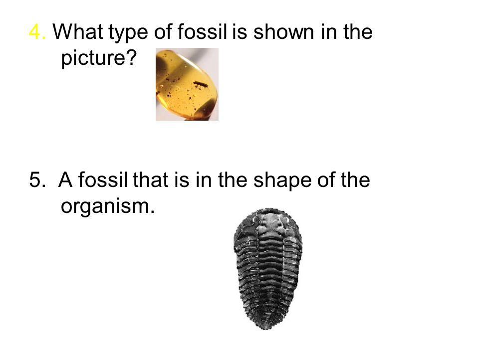 4. What type of fossil is shown in the picture 5. A fossil that is in the shape of the organism.