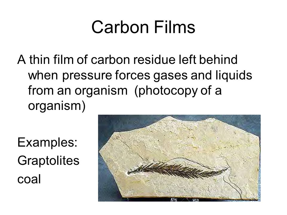 Carbon Films A thin film of carbon residue left behind when pressure forces gases and liquids from an organism (photocopy of a organism) Examples: Graptolites coal