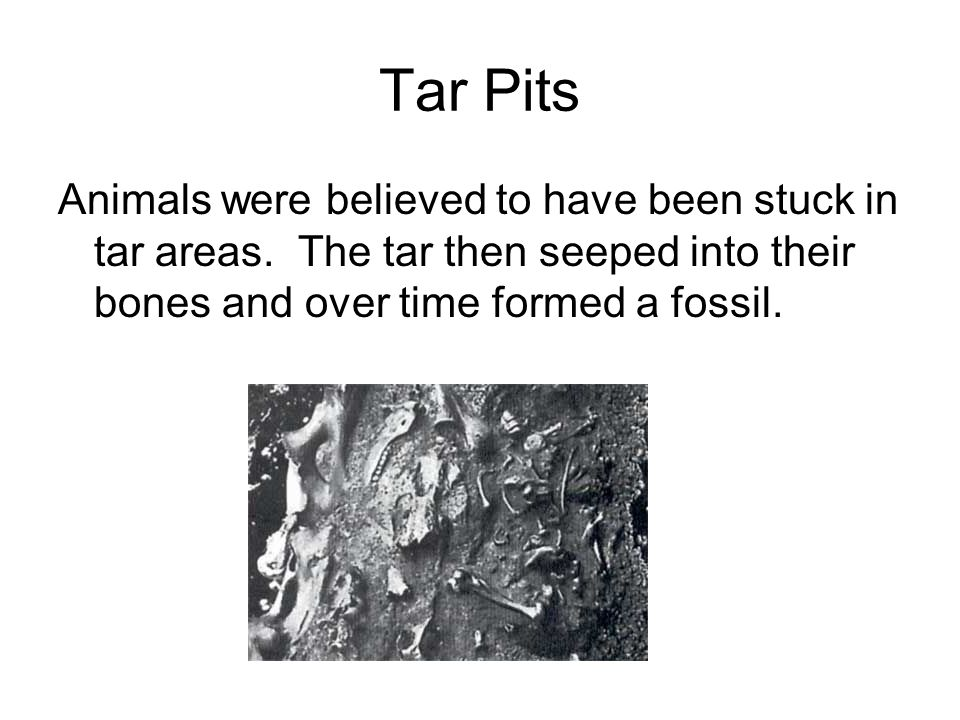 Tar Pits Animals were believed to have been stuck in tar areas.