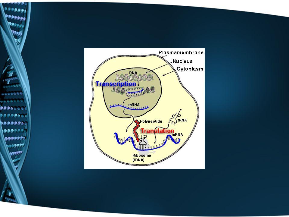 Central Dogma of Molecular Biology DNA  RNA  protein