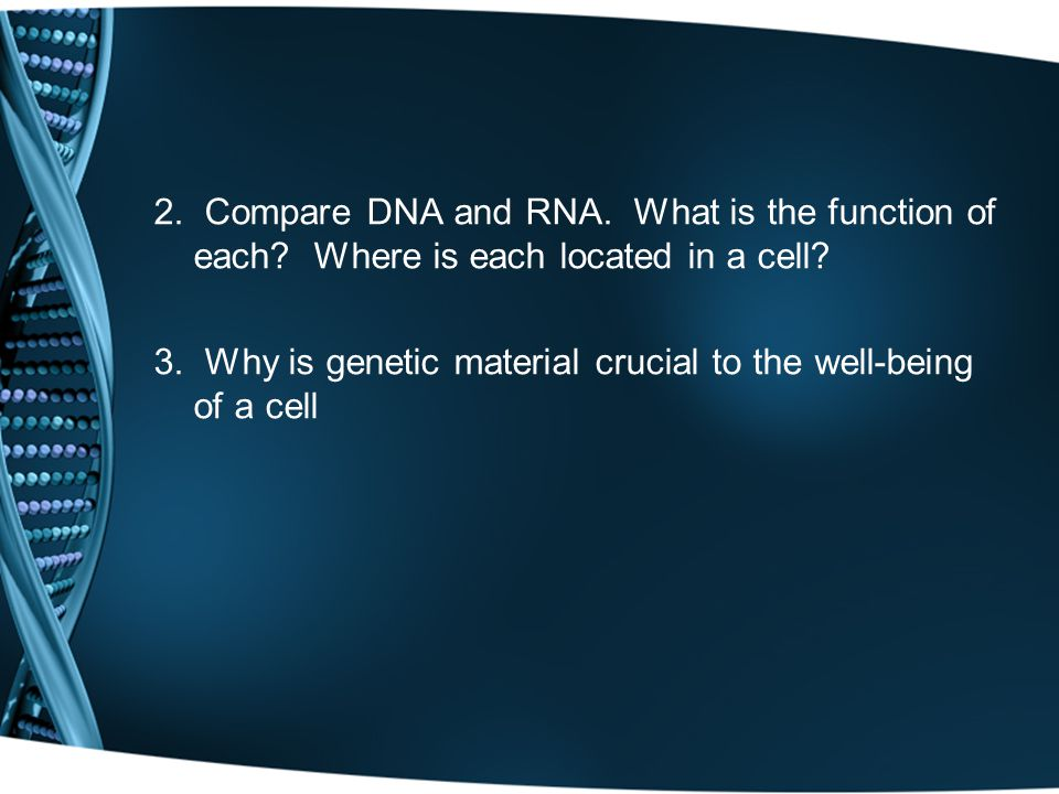 2. Compare DNA and RNA. What is the function of each.