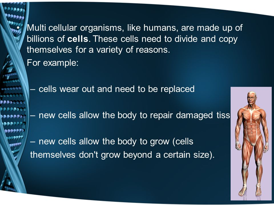 Multi cellular organisms, like humans, are made up of billions of cells.
