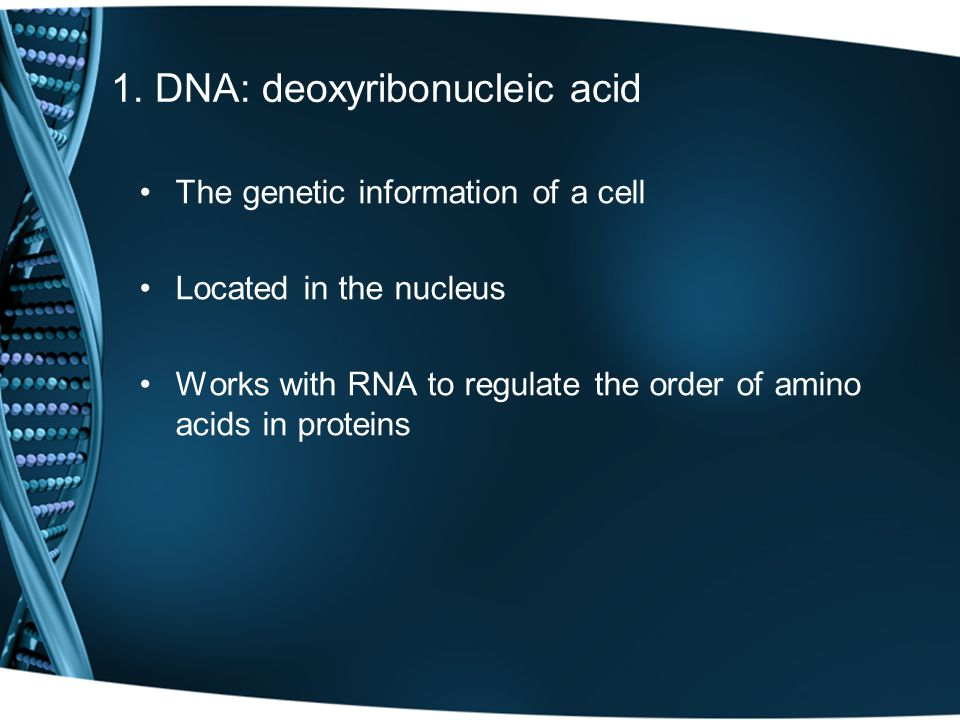 Made of 4 nucleotides: adenine, thymine, cytosine, guanine