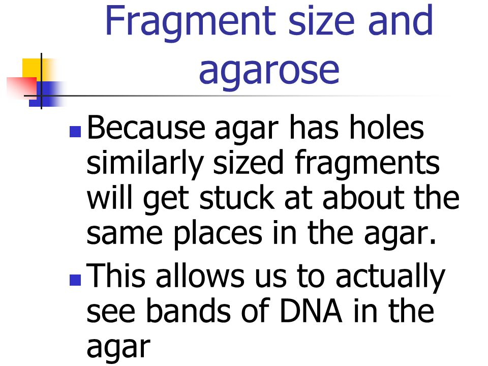 Fragmented DNA is inserted into the wells