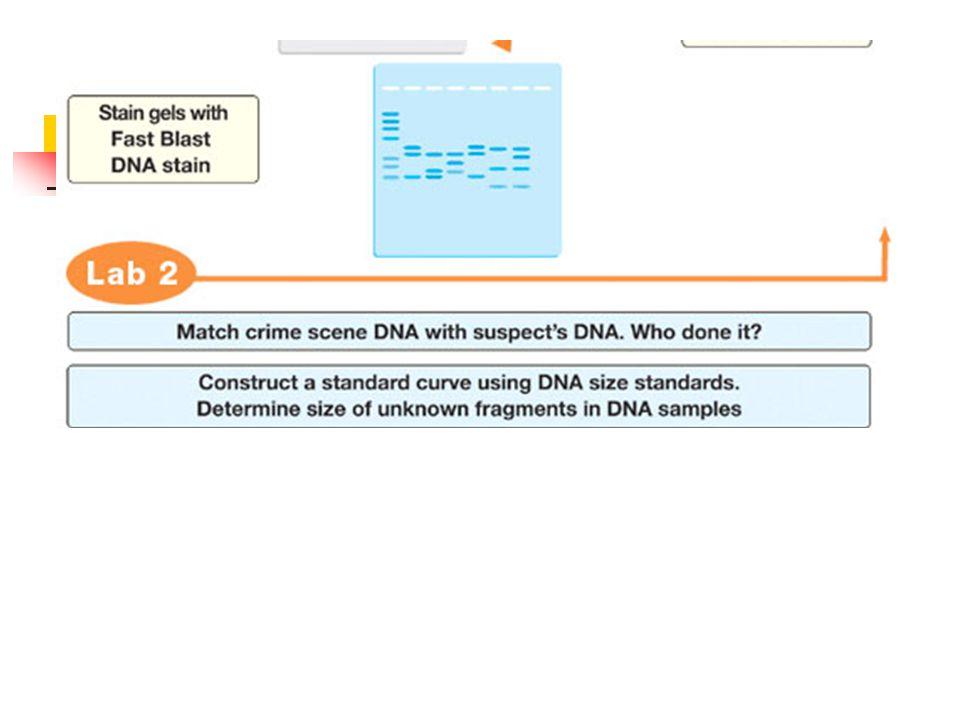 Interpreting DNA Fingerprint Results