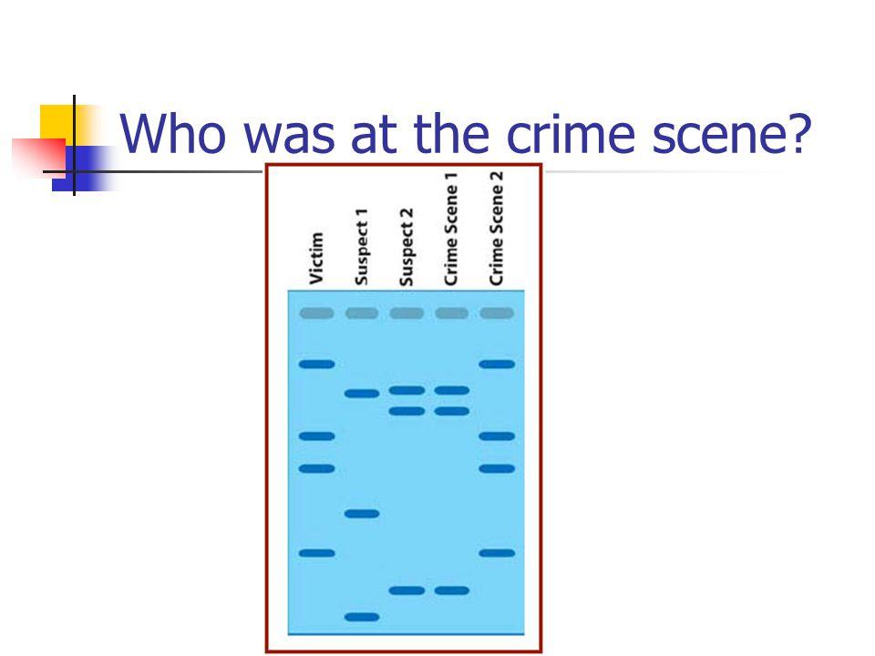 Graph the DNA size standard (AKA standard marker ) distances