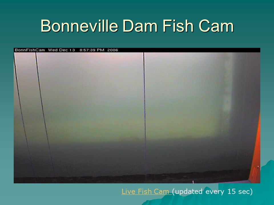 Bonneville Dam Fish Cam Live Fish Cam Live Fish Cam (updated every 15 sec)
