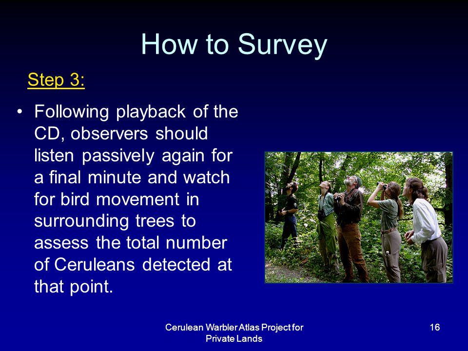 Cerulean Warbler Atlas Project for Private Lands 16 How to Survey Following playback of the CD, observers should listen passively again for a final minute and watch for bird movement in surrounding trees to assess the total number of Ceruleans detected at that point.