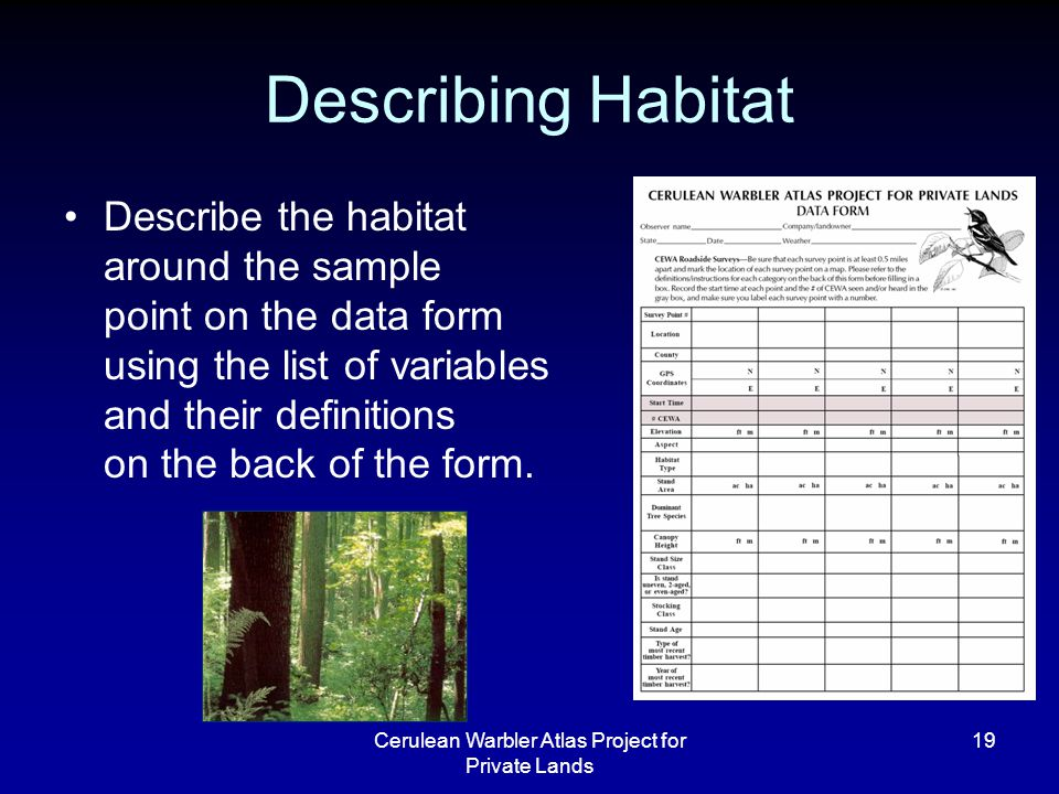 Cerulean Warbler Atlas Project for Private Lands 19 Describing Habitat Describe the habitat around the sample point on the data form using the list of variables and their definitions on the back of the form.