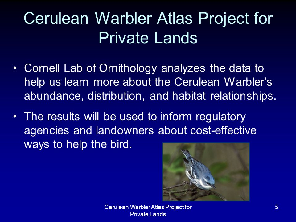 Cerulean Warbler Atlas Project for Private Lands 5 Cornell Lab of Ornithology analyzes the data to help us learn more about the Cerulean Warbler's abundance, distribution, and habitat relationships.