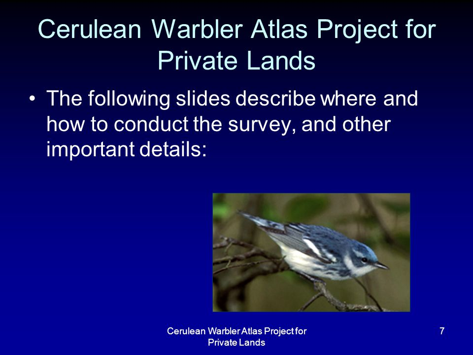 Cerulean Warbler Atlas Project for Private Lands 7 The following slides describe where and how to conduct the survey, and other important details: