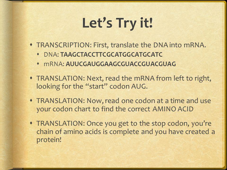 Let's Try it.  TRANSCRIPTION: First, translate the DNA into mRNA.