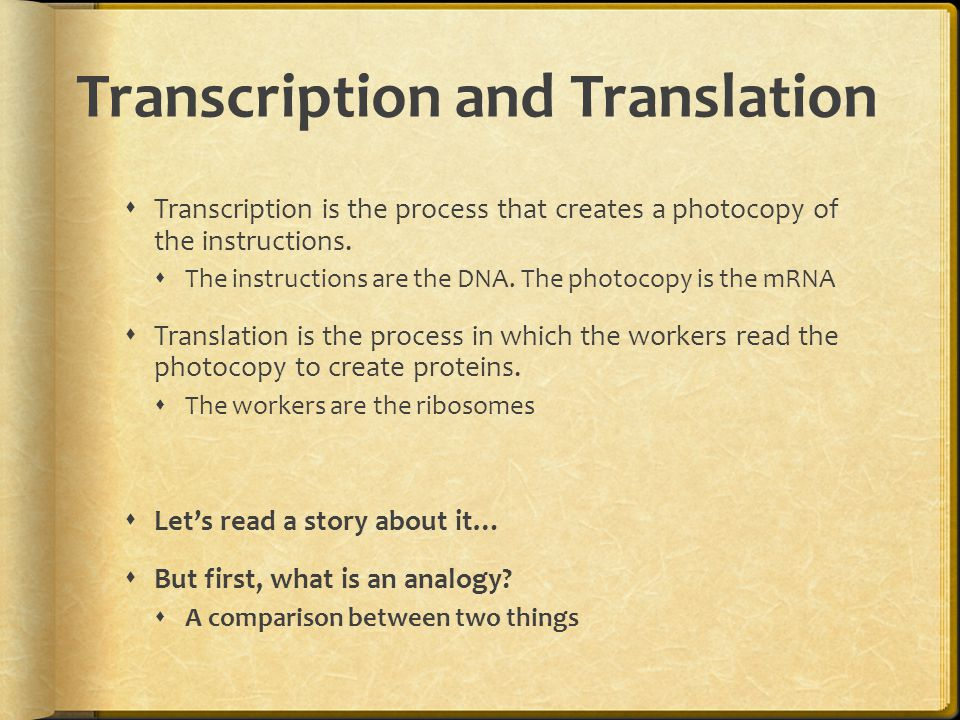 Translation  Translation starts with the mRNA leaving the nucleus for the cytoplasm  A ribosome grabs hold of a strand of mRNA and starts to read it, three letters at a time.