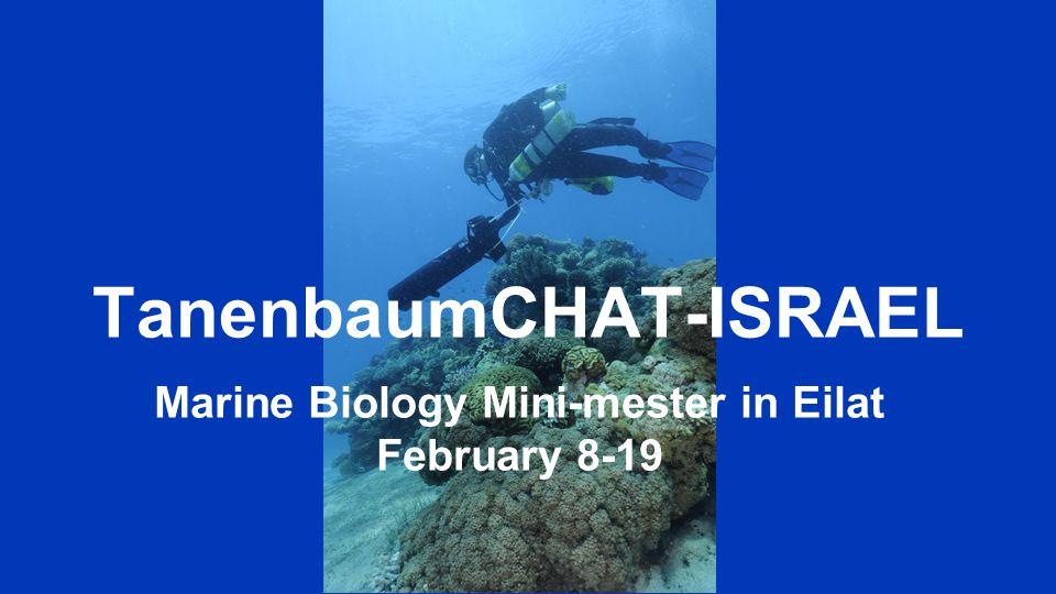 TanenbaumCHAT-ISRAEL Marine Biology Mini-mester in Eilat February 8-19