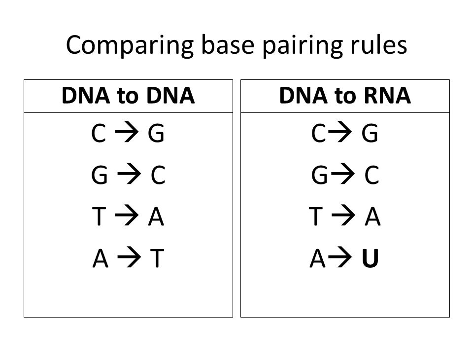 Comparing base pairing rules DNA to DNA C  G G  C T  A A  T DNA to RNA C  G G  C T  A A  U