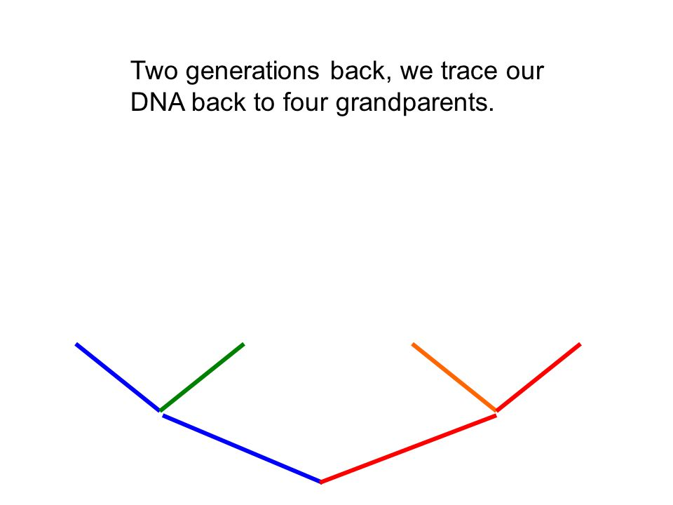 Two generations back, we trace our DNA back to four grandparents.