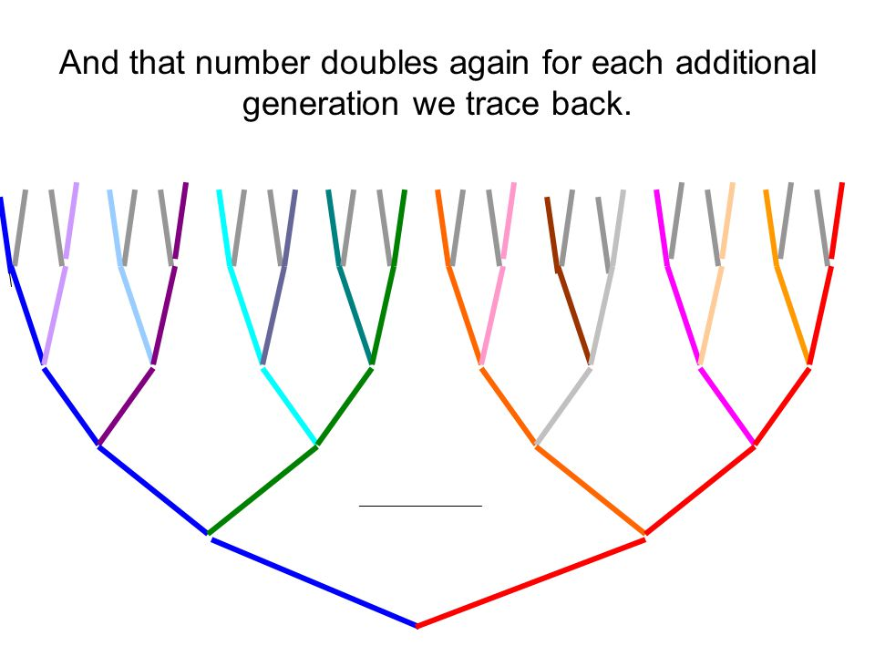 _______________ And that number doubles again for each additional generation we trace back.