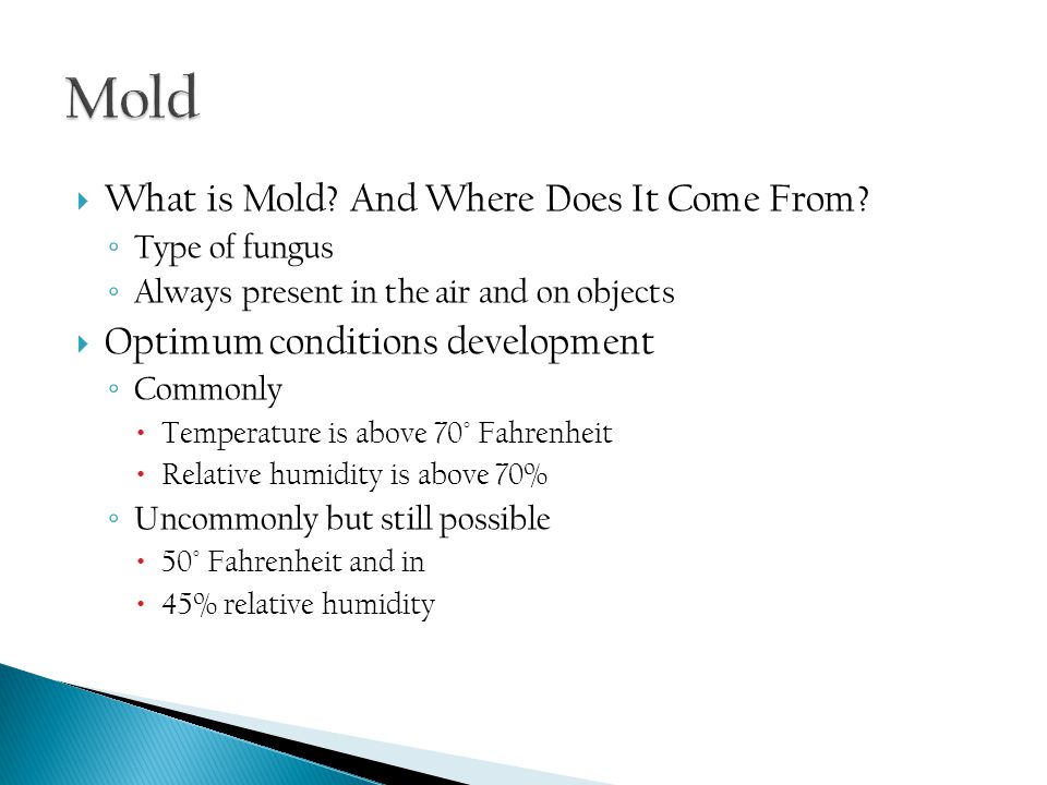  What is Mold. And Where Does It Come From.