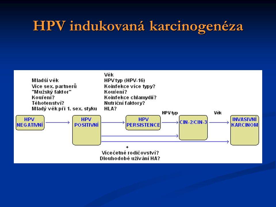 HPV indukovaná karcinogenéza