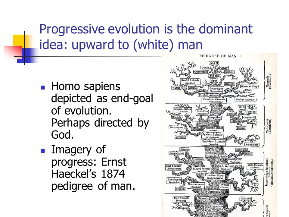 Progressive evolution is the dominant idea: upward to (white) man Homo sapiens depicted as end-goal of evolution.