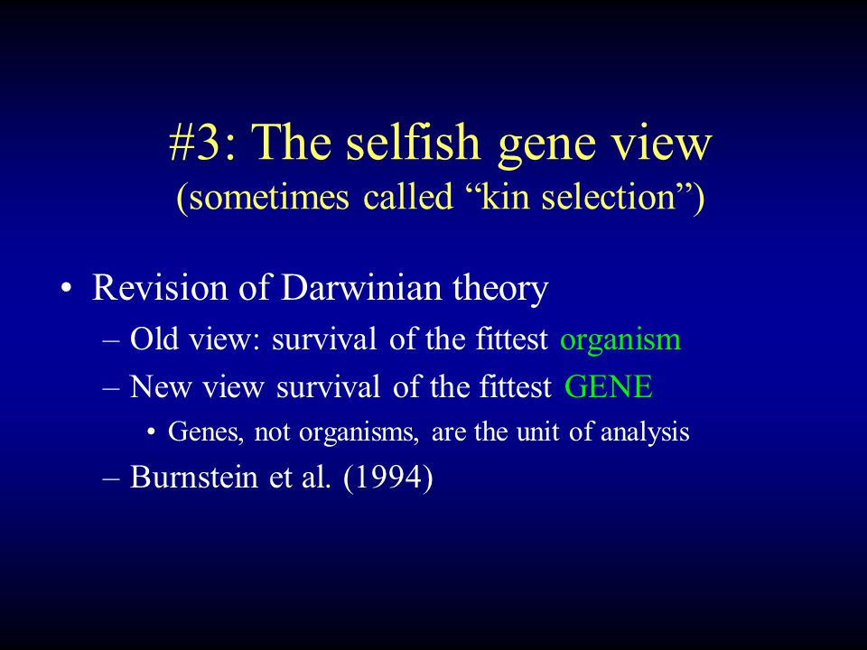 #3: The selfish gene view (sometimes called kin selection ) Revision of Darwinian theory –Old view: survival of the fittest organism –New view survival of the fittest GENE Genes, not organisms, are the unit of analysis –Burnstein et al.