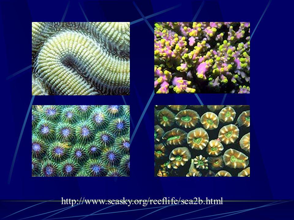 http://www.seasky.org/reeflife/sea2b.html