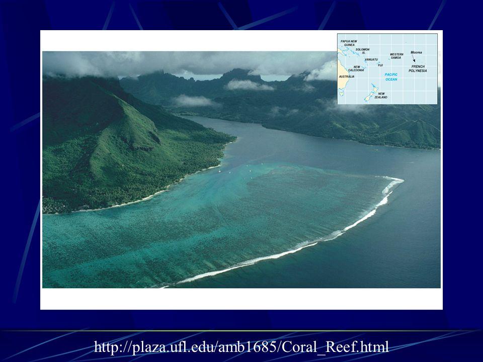http://plaza.ufl.edu/amb1685/Coral_Reef.html