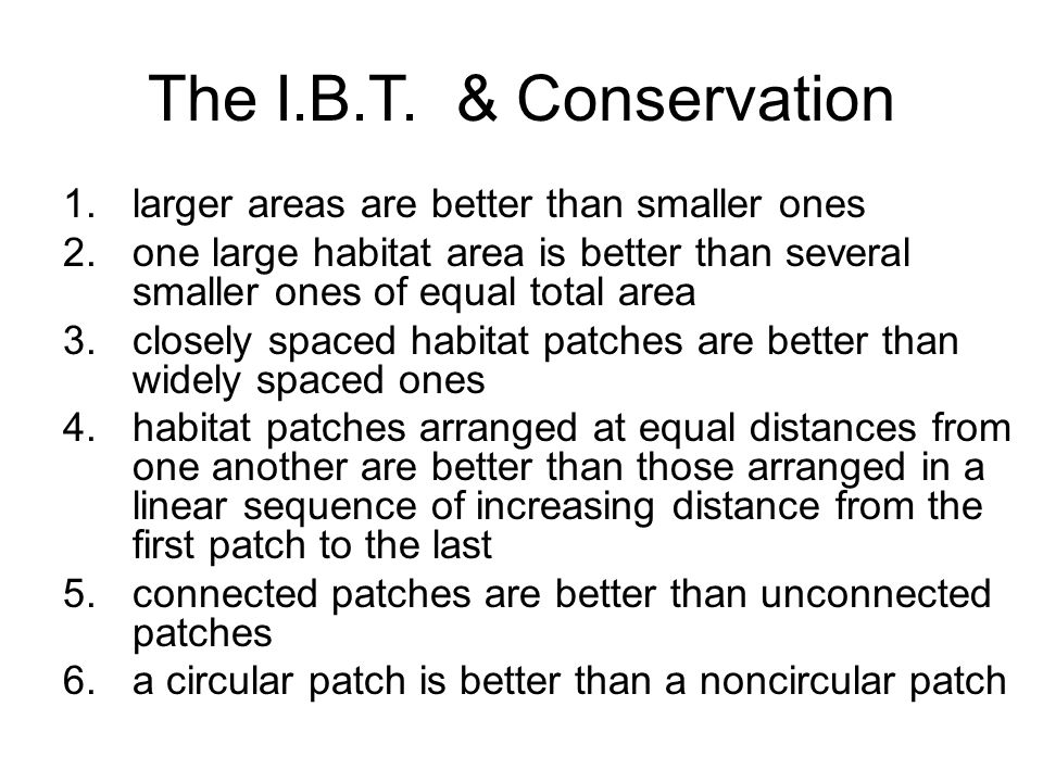 The I.B.T.