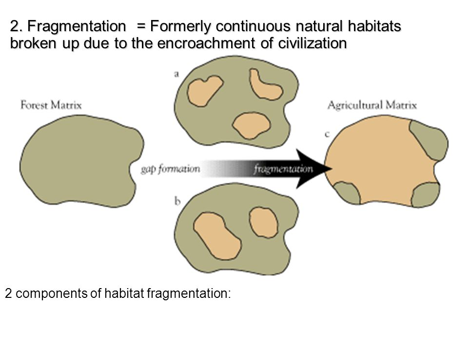 2. Fragmentation = Formerly continuous natural habitats broken up due to the encroachment of civilization 2 components of habitat fragmentation: