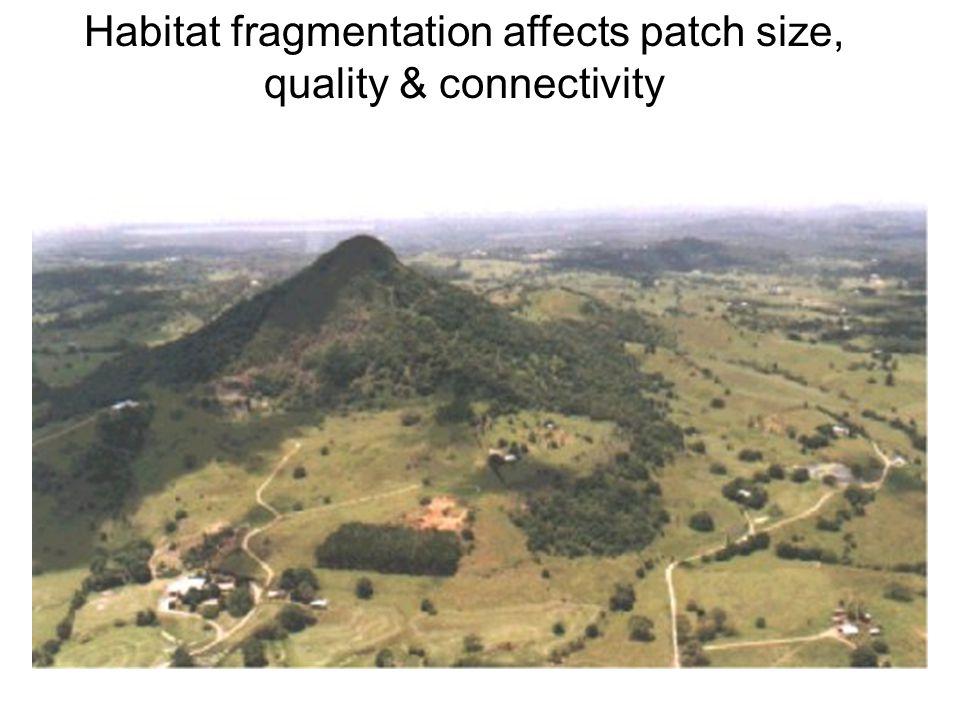 Habitat fragmentation affects patch size, quality & connectivity