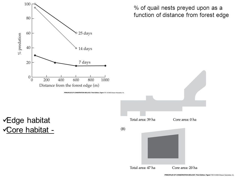 % of quail nests preyed upon as a function of distance from forest edge Edge habitat Core habitat -