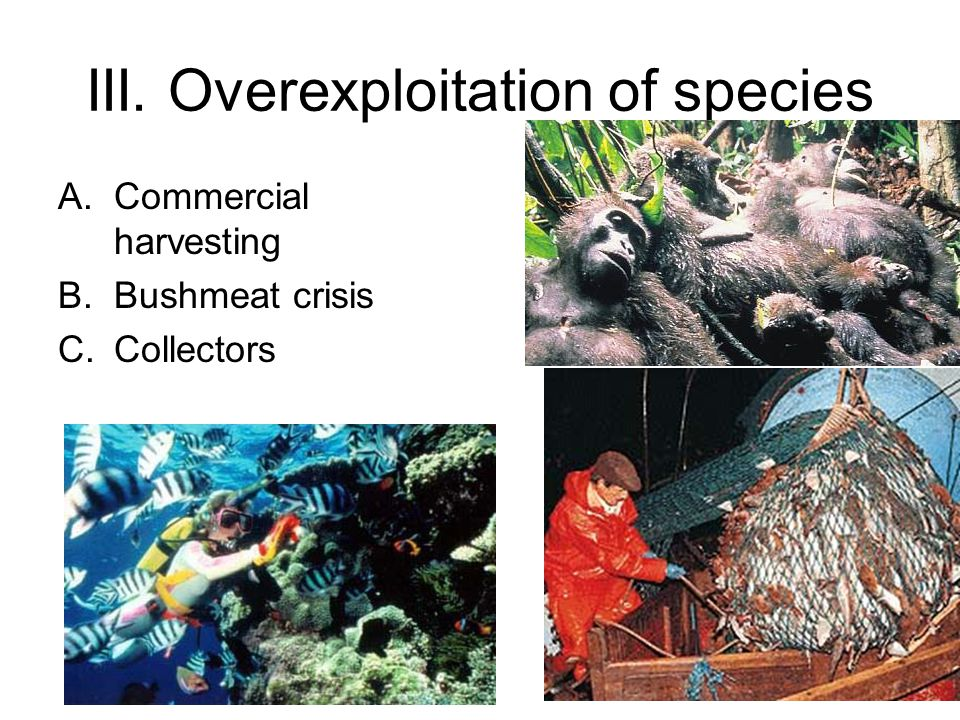 III. Overexploitation of species A.Commercial harvesting B.Bushmeat crisis C.Collectors