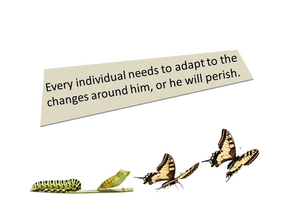 Every individual needs to adapt to the changes around him, or he will perish.