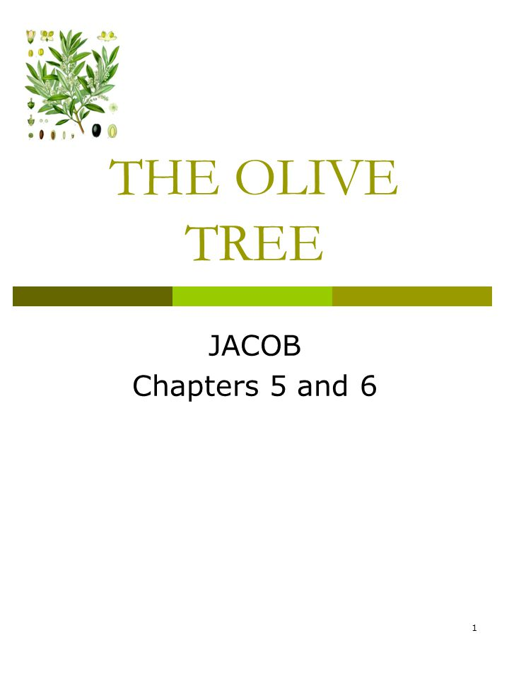 THE OLIVE TREE JACOB Chapters 5 and 6 1