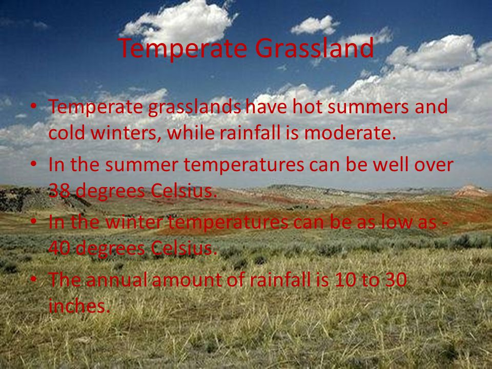 Temperate Grassland Temperate grasslands have hot summers and cold winters, while rainfall is moderate. In the summer temperatures can be well over 38
