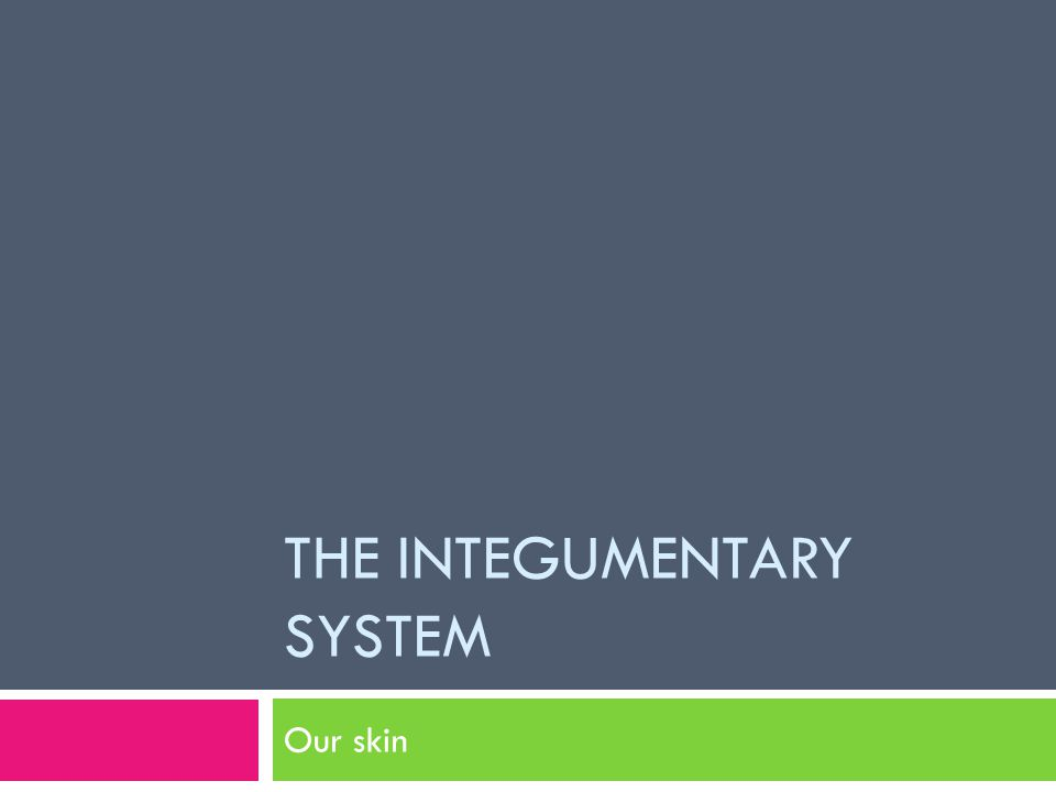 THE INTEGUMENTARY SYSTEM Our skin