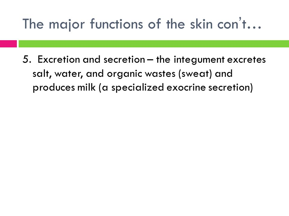 The major functions of the skin con't… 5. Excretion and secretion – the integument excretes salt, water, and organic wastes (sweat) and produces milk