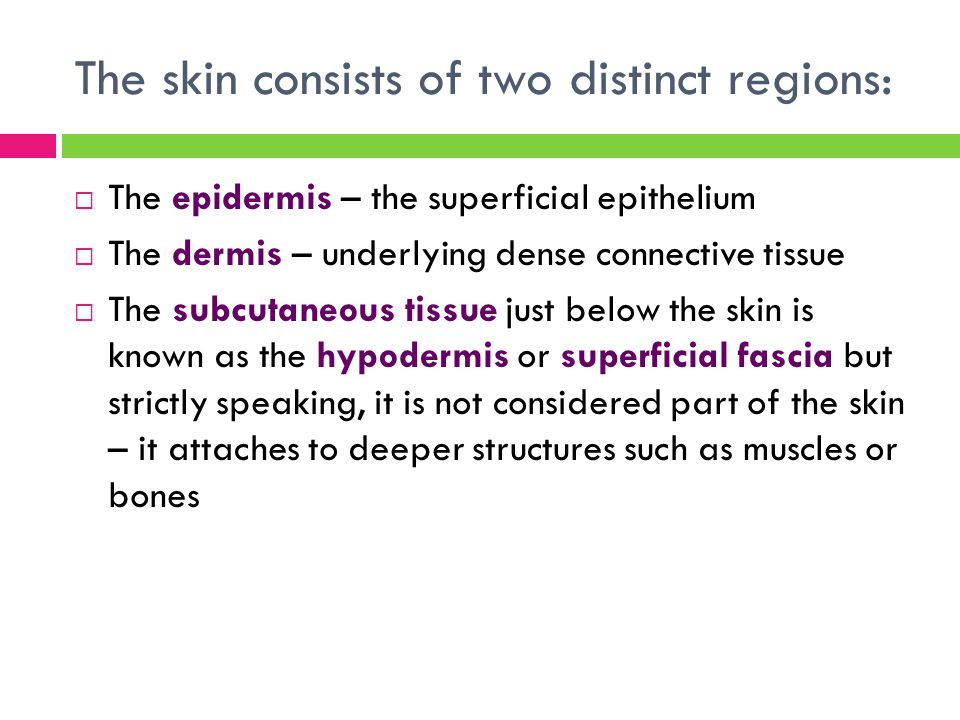 The skin consists of two distinct regions:  The epidermis – the superficial epithelium  The dermis – underlying dense connective tissue  The subcut