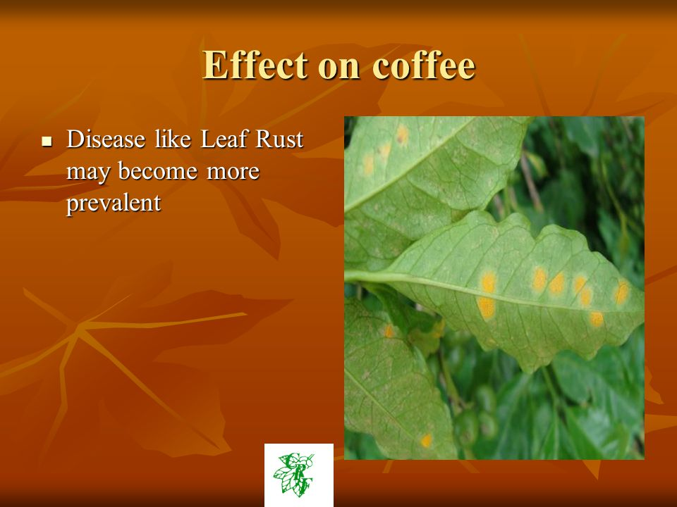Effect on coffee Disease like Leaf Rust may become more prevalent Disease like Leaf Rust may become more prevalent