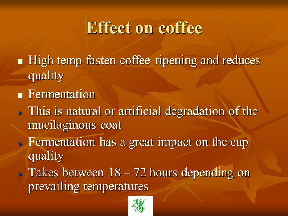 Effect on coffee High temp fasten coffee ripening and reduces quality High temp fasten coffee ripening and reduces quality Fermentation Fermentation This is natural or artificial degradation of the mucilaginous coat Fermentation has a great impact on the cup quality Takes between 18 – 72 hours depending on prevailing temperatures