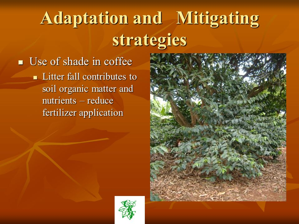 Adaptation and Mitigating strategies Use of shade in coffee Use of shade in coffee Litter fall contributes to soil organic matter and nutrients – reduce fertilizer application Litter fall contributes to soil organic matter and nutrients – reduce fertilizer application